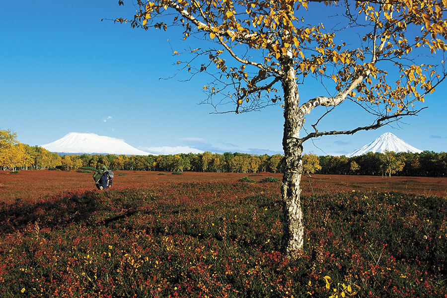 mg_92397_kamchatka_autumn_tundra_280x210.jpg