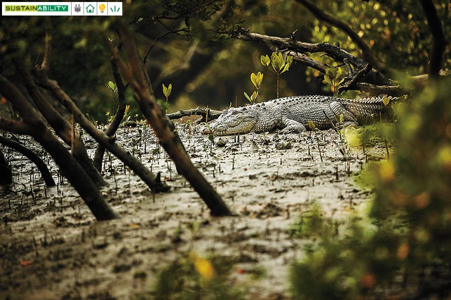 g_117285_salted_water_crocodile_280x210.jpg