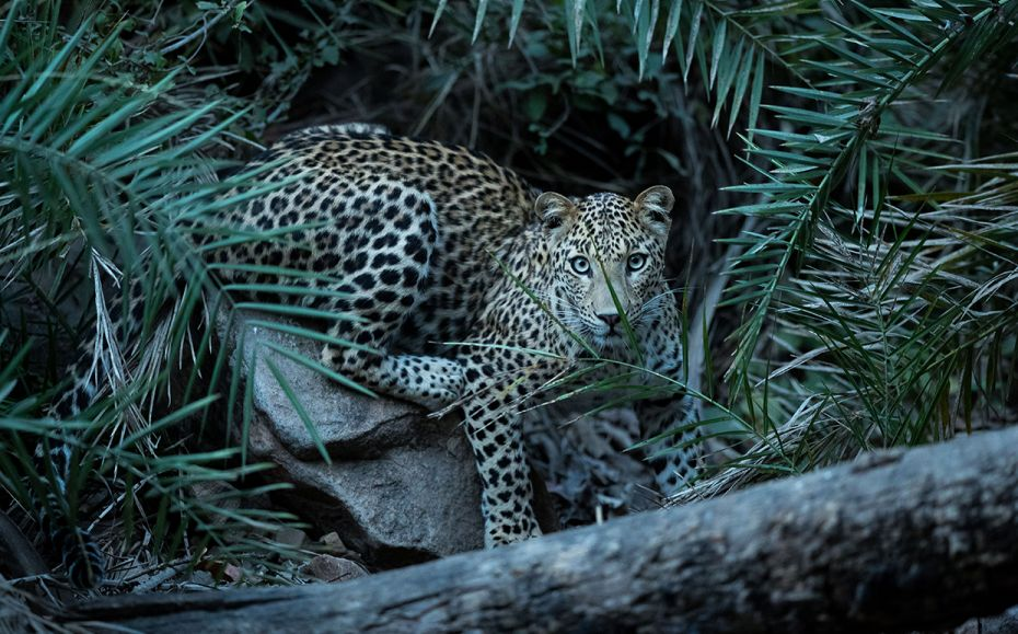 Jungle book: Majestic photos of India's wildlife